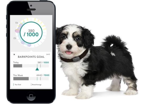 wearables for pets 01